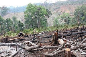 Để người thân phá rừng, một trưởng phòng NN&PTNT huyện bị bắt