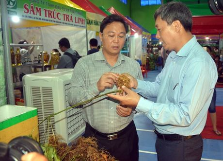 Ban duoc hon 4,5 ty dong tu phien cho sam Ngoc Linh dau tien o Quang Nam - Anh 1