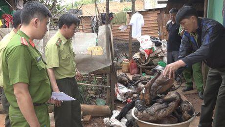 Lam Dong: Phat hien nhieu ca the dong vat hoang da trong quan nhau - Anh 1